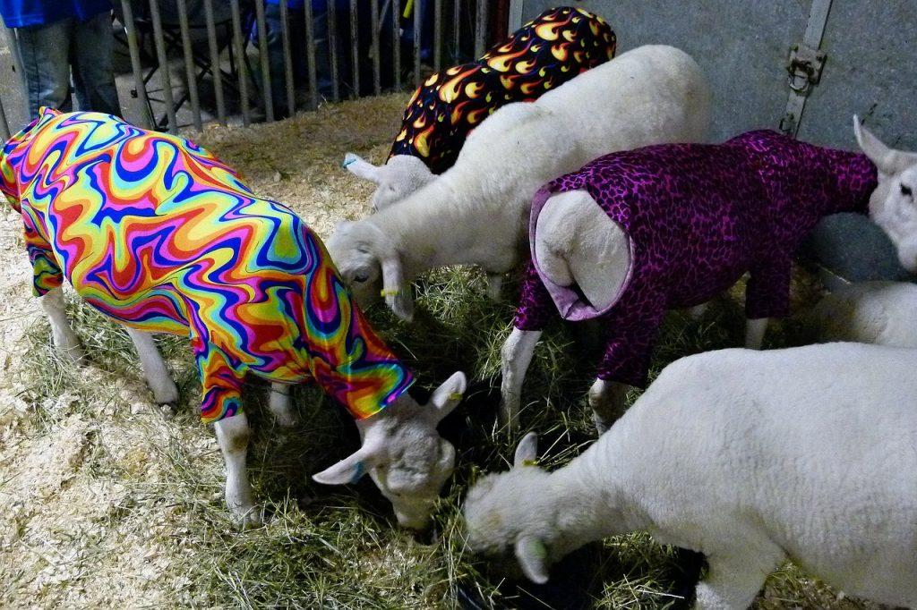 Colourful, light garments with the correct shape have little impact on a sheep's day-to-day life.